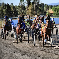 Carnival of Cups - Griffith Harness Racing